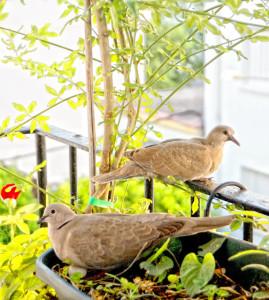 balcon-palomas